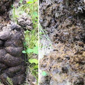 Två bilder på avföring med inslag av växtfiber.