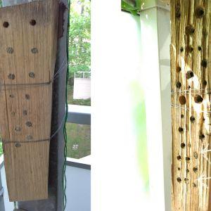 Två bilder på ett så kallat insektshotell, gjort av ett vedträ med borrade hål. Bilden till vänster har igentäppta hål, bilden till höger har insekterna flyttat ut.