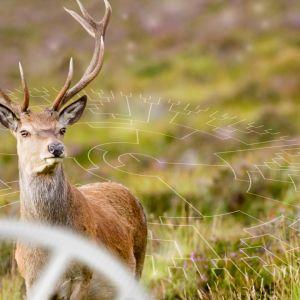 Voisiko ihminen valjastaa eläinten superkyvyt lääketieteen hyväksi?