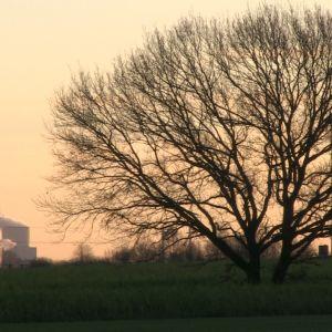 Miljöorganisationerna ser det nya stenkolskraftverket som en ödesdiger signal till omvärlden