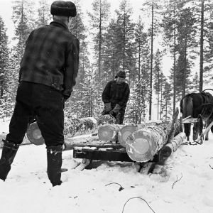 Mustavalkoinen kuva metsätyöstä.