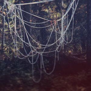 Lankoja metsässä