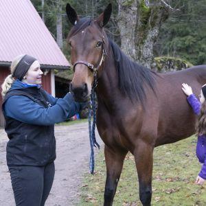 kuvassa hevonen ja tyttö