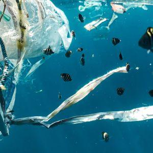 kaloja ja muovia meressä