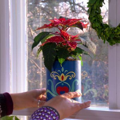 Camilla placerar en julstjärna i köksfönstret.
