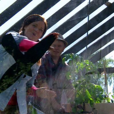 Camilla limmar rovfågelssiluetter på de stora fönstren