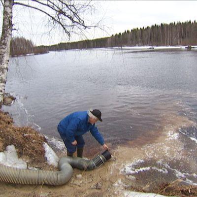 Järvitaimenten vaelluskäyttäytymistä seurataan kolmen vuoden ajan.