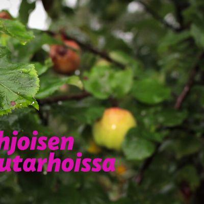 Pohjoisen puutarhoissa -logo ja omenapuu