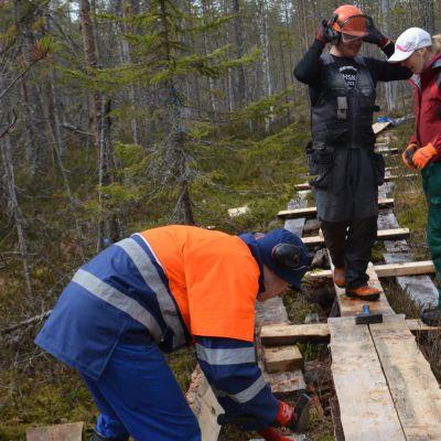 Kenttäpäällikkö Olli Vainio ja talkoolaiset korjaamassa pitkospuita Martimoaavan soidensuojelualueella.