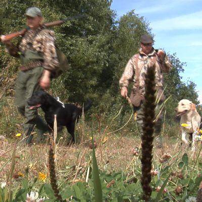 Metsästäjiä koirien kanssa
