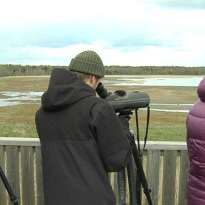 Lintuharrastajat kiikareineen lintutornissa
