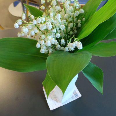 kukkia lottokupongin päällä