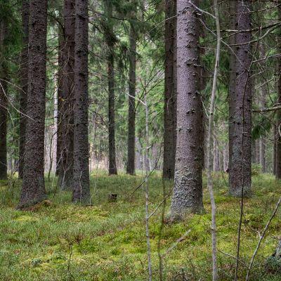 Metsää.