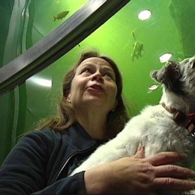 Bim-koira katselee sampia akvaariotalo Maretariumissa