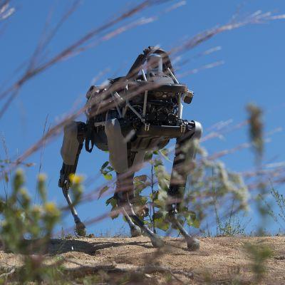 Nelijalkainen robotti Spot esittelyssä Quanticon merijalkaväen tukikohdassa Viginiassa syyskuussa 2015.