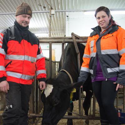 Terhi ja Jari Kortelainen sekä Lumikki-lehmä.