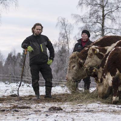 Mats ja Pauliina Holmqvist Hereford-karjan parissa.