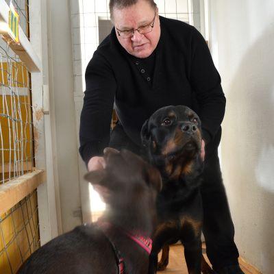 Kuvassa Eläinhoitola Kotipesän Pekka Puolimatka ja rotweiler Bemu,joka nuolaisi toimittajan kameran linssiä, sekä pieni kelpie Dani.