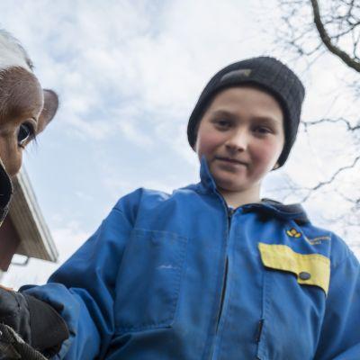 Poika seisoo vasikan kanssa Iivonlahden maitotilalla navetan edessä