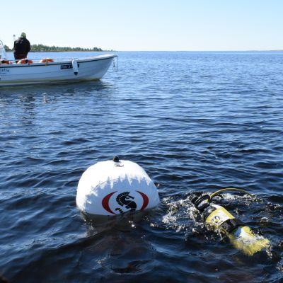 Metsähallituksen sukeltaja menossa veden alle, taustalla vene.