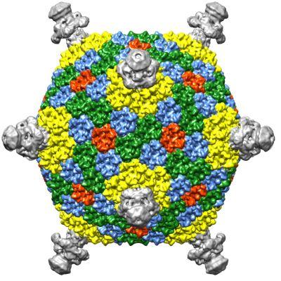 FLiP-virus.