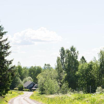 Kylätie, jonka varrella peltoa ja metsää.