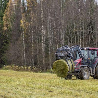 Traktori kuljettaa viljapaalia Sotkamossa.