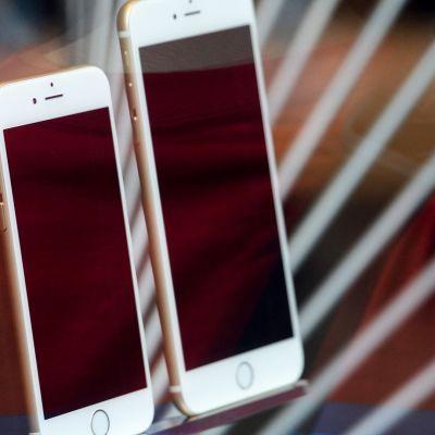 iPhone 6 ja iPhone 6 Plus näytteillä Applen myymälässä Pasadenassa Kaliforniassa 19. syyskuuta.