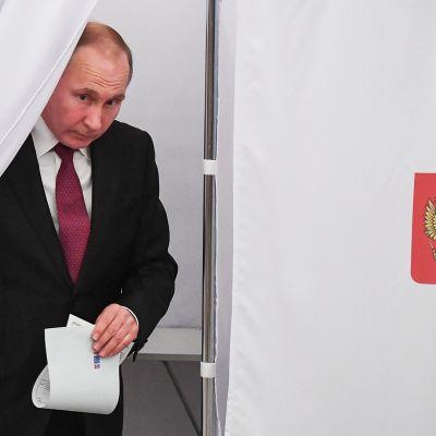 Presidentti Vladimir Putin tulee ulos äänestyskopista.
