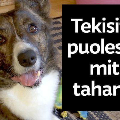 Robbe-koira