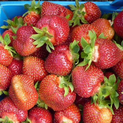 Avomaan mansikoita korissa.