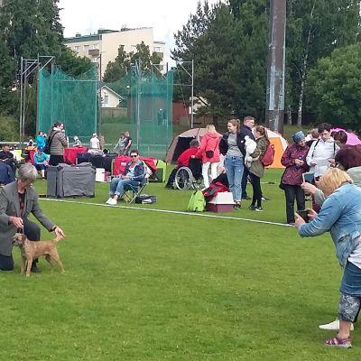 Kemissä kaikkien rotujen kansainvälisessä koiranäyttelyssä 2017