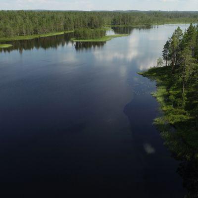 Järvimaisema Tiilikkajärven kansallispuistossa.