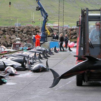 Kuva Färsaarilta 26. elokuuta 2006.