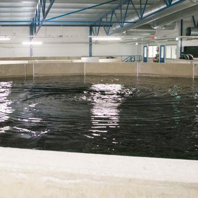 Finnforell Oy:n kalanviljelylaitos Varkaudessa.