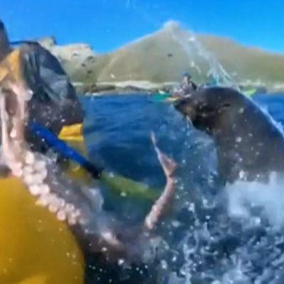 Hylje läimäytti melojaa mustekalalla