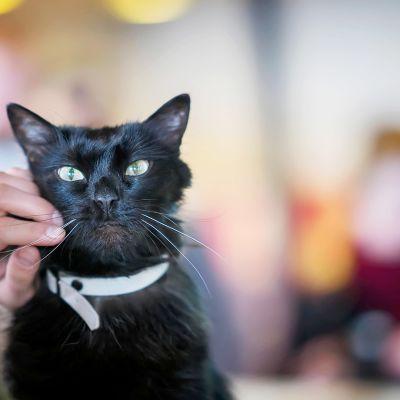 Eläinten viikolla helpotetaan kissakriisiä