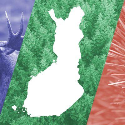 Kuvituskuva: hirvi, metsää ja ja männynkäpy.
