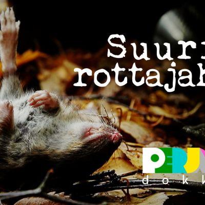 Perjantai-dokkari: Suuri rottajahti