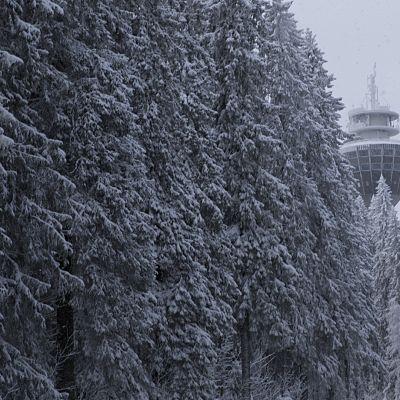 Puijon torni metsän takana.
