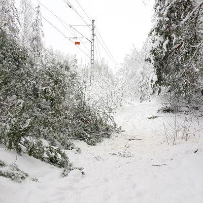 Radalle kaatunut puu on katkaissut liikenteen Joutsenossa.