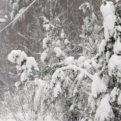sähkölinja lumisessa metsässä Lemillä