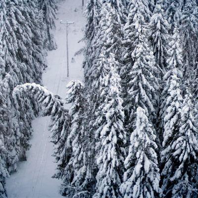 Luminen puu kaatumaisillaan sähkölinjan päälle.