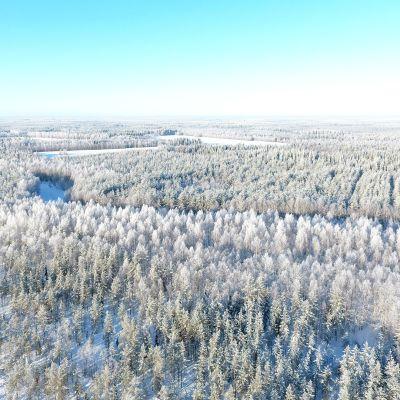 Maisemaa Keminmaan Sompujärveltä, huurteisen metsän läpi kiemurtaa Akkunusjoki.