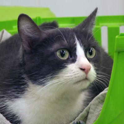 Kissa vihreässä kuljetuskopassa eläinlääkärin vastaanotolla