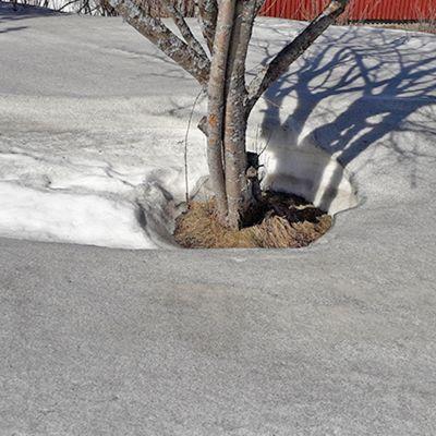 Kivipölyn värjäämä lumihanki Kuhmossa.