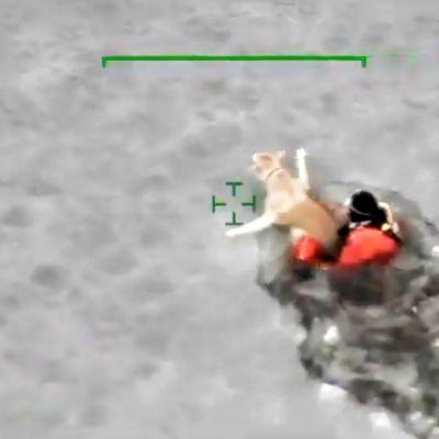 Koira jäissä