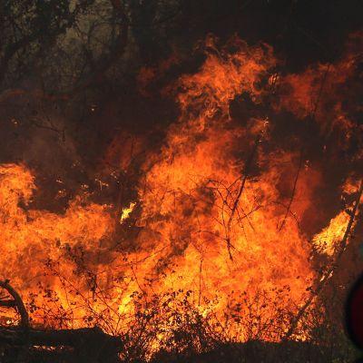 Palokunta yritti sammuttaa metsäpaloa Roboren lähistöllä Boliviassa 22. elokuuta.