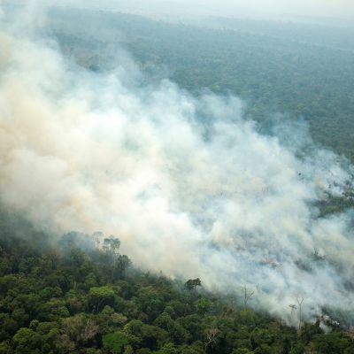 Ilmakuva Porto Velhosta Rondoniasta Amazonin sademetsän eräältä paloalueelta Brasiliassa 23. elokuuta.