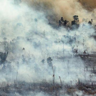 Jamanximin suojeltu alue ja kansallispuisto kuvattuna Paran osavaltiossa Brasiliassa 23. elokuuta.